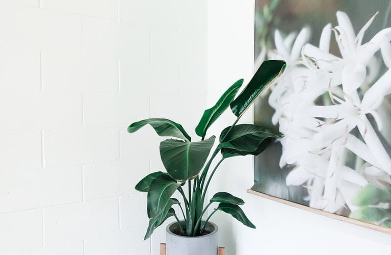 5 Indoor Plants That Help Improve Air Quality